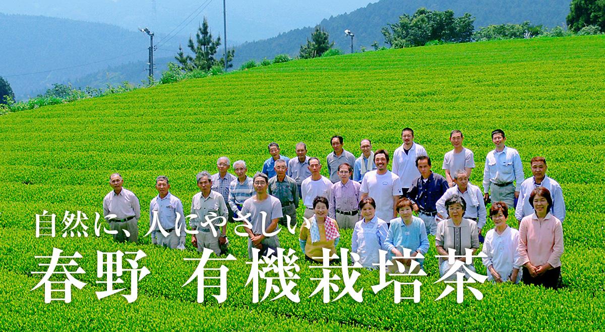 静岡 春野 有機栽培茶