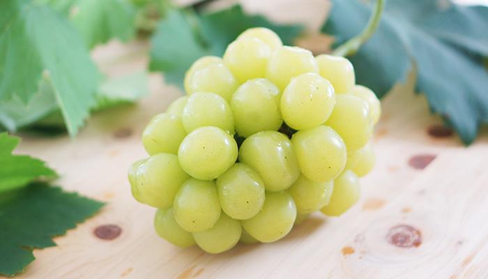 レア品種 新品種の高級ブドウ「マスカ・サーティーン」