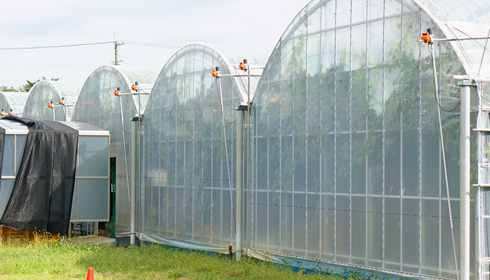 ハウス栽培で病気を防ぐ ブドウ ウインク