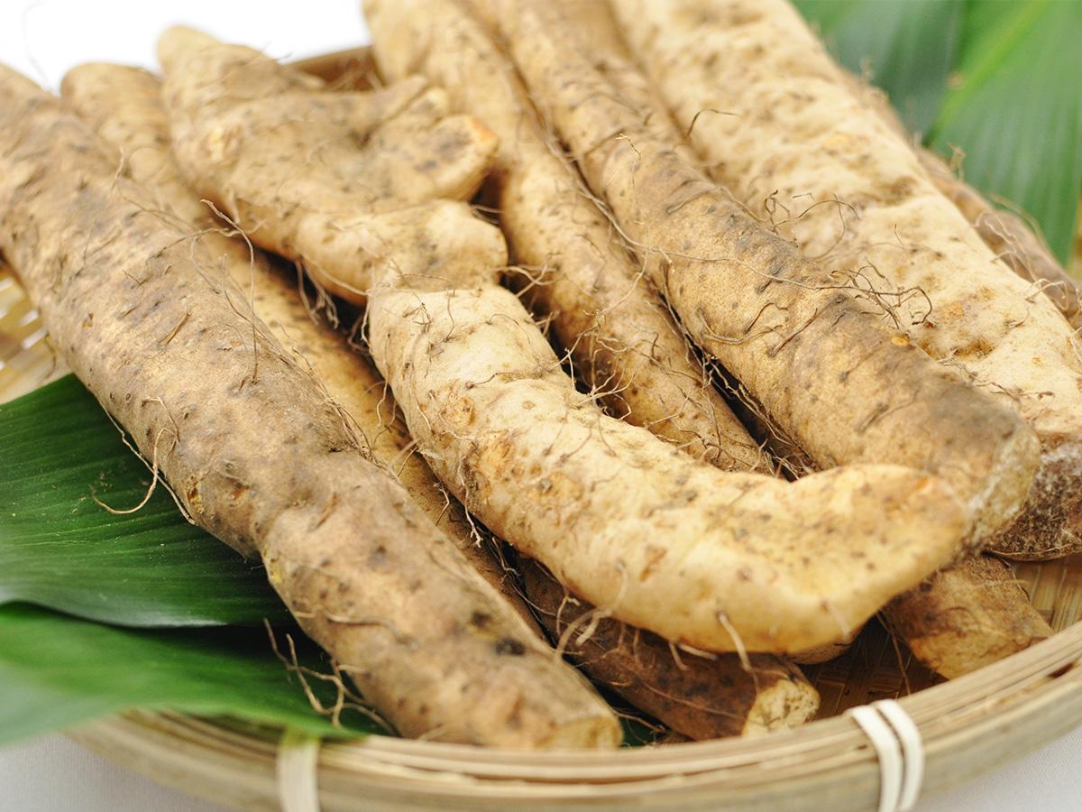 静岡 牧之原 自然薯