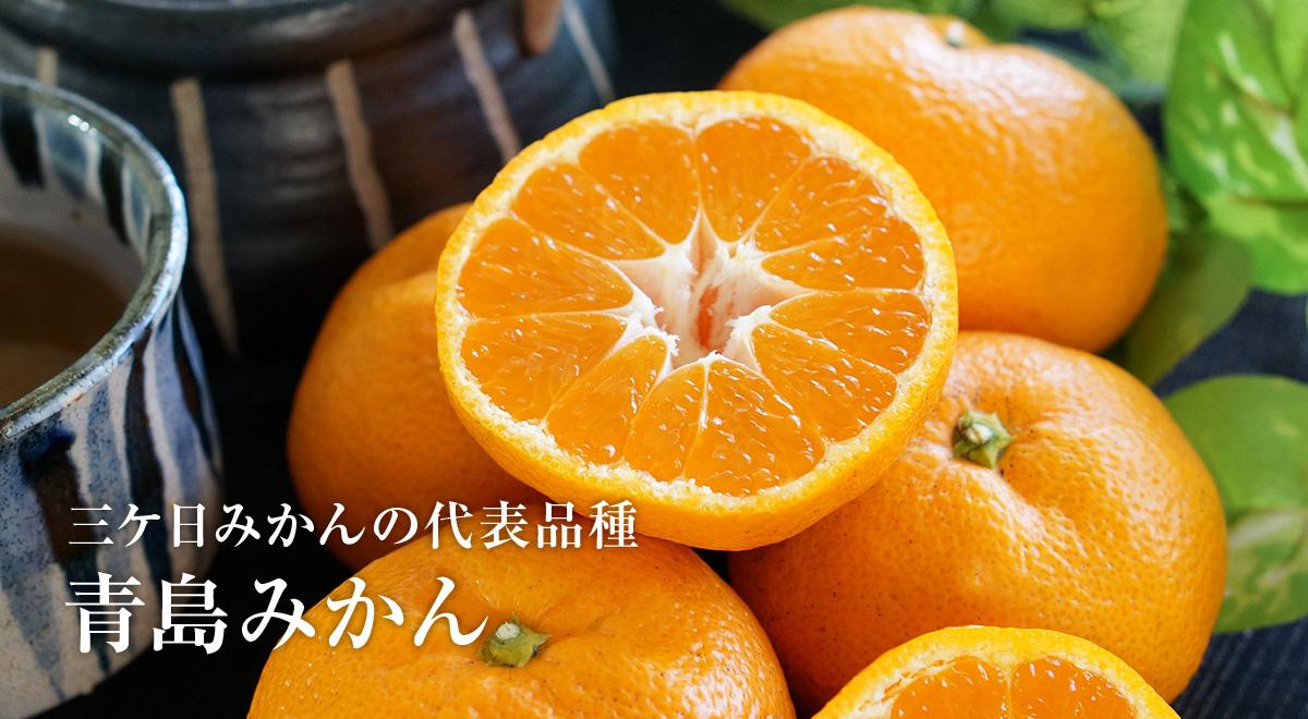 静岡・浜名湖 三ケ日みかん 青島みかん