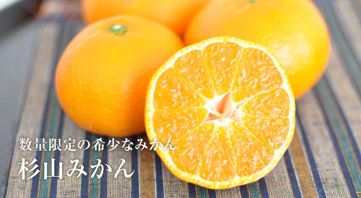 静岡・浜名湖 三ケ日みかん 杉山みかん