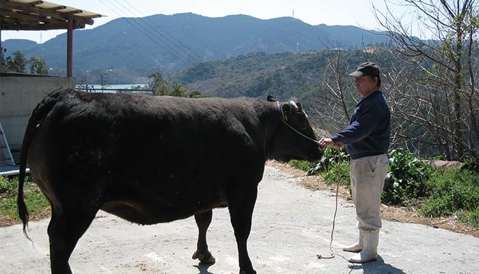 安心安全な黒毛和牛