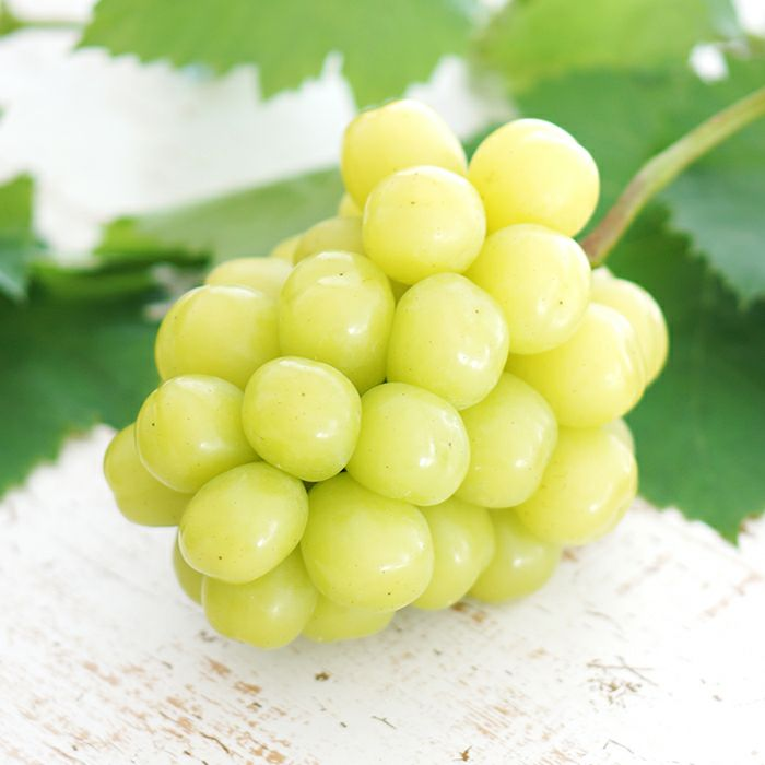 希少種高級ブドウ「マスカ・サーティーン」